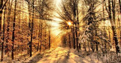 солнцеворот,зима,лес,