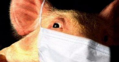 свиной грипп,