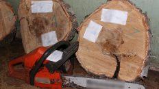 За незаконную рубку деревьев под суд