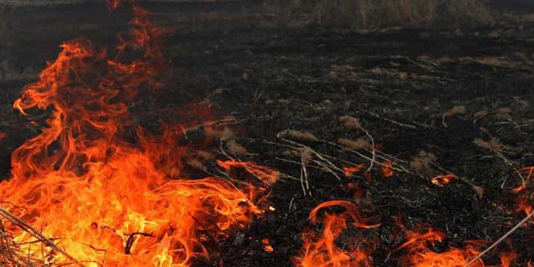 В регионе на 1-5 мая вводится особый противопожарный режим