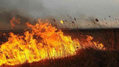 Photo of За нарушение особого противопожарного режима в регионе составлено 76 протоколов
