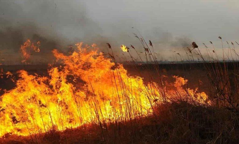 особый противопожарный режим,горит трава в поле,пожар в поле,