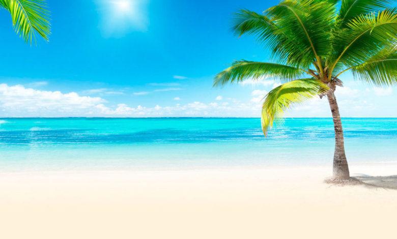 туристическое агентство,море пальмы,