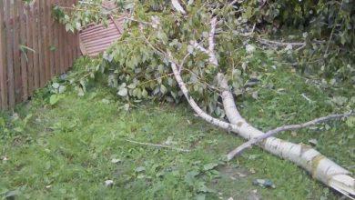 Photo of Упавшее дерево едва не придавило женщину с двумя детьми