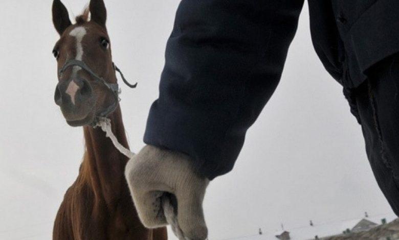 конокрадство,кража лошадей,