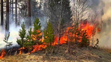 Photo of С начала года в регионе произошли 42 лесных пожара
