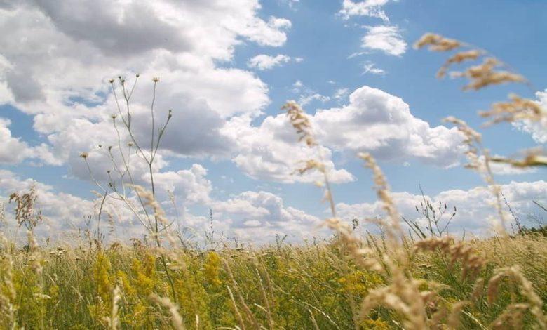 август полевые травы,