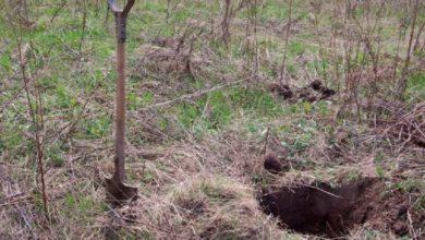 Photo of Убили женщину и закопали в лесу