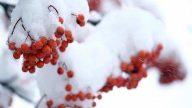 Photo of Мокрый снег и небольшое потепление