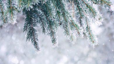 Photo of Погода на 31 декабря