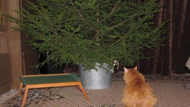 Photo of Куда ставить ёлку, чтобы она простояла до конца новогодних праздников