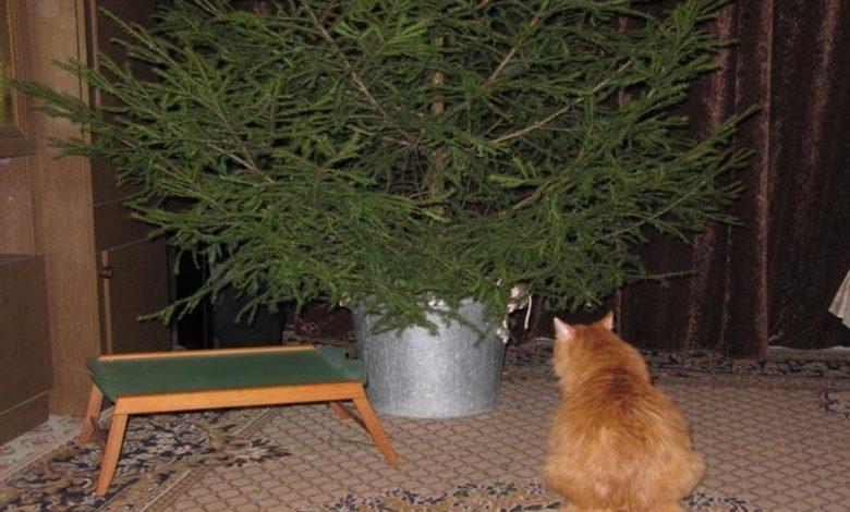 елка,ёлка,новогодняя ёлка,новогодняя ель,