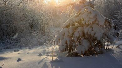 Photo of 30 декабря — Данилов день. Что нельзя делать в этот день?
