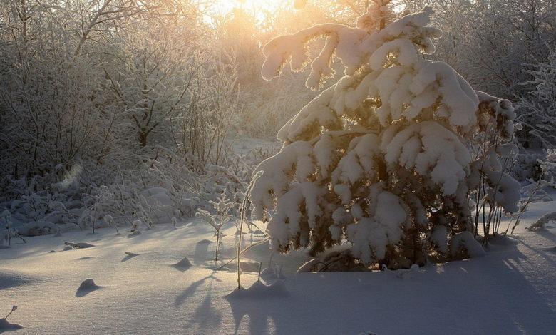 морозный день,зима,
