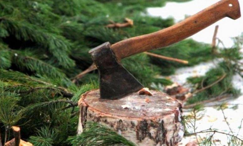 незаконная рубка елок,топор в пне елки,