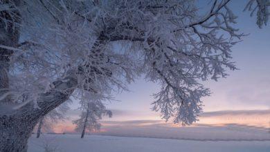 Photo of 17 декабря — Варварин день. Что не рекомендуется делать в этот день?