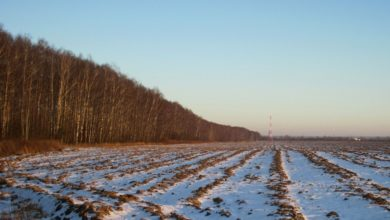 Photo of Мороз и солнце: о погоде на завтра