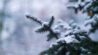 Photo of 27 декабря — Филимонов день. Что можно и нельзя делать в этот праздник?