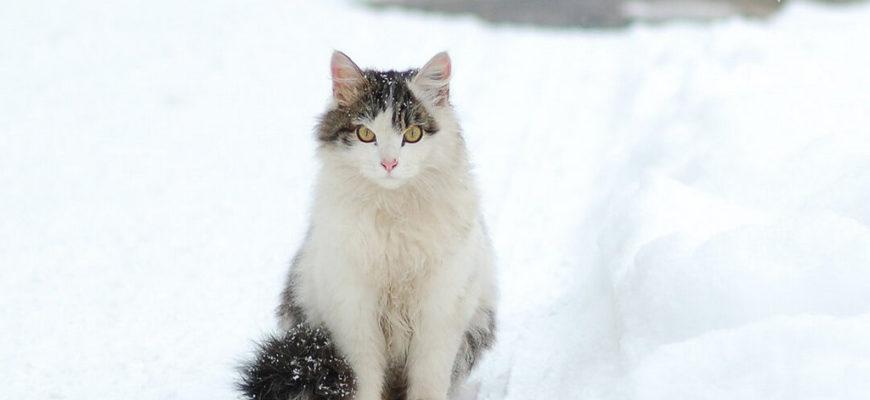 кошка на снегу,