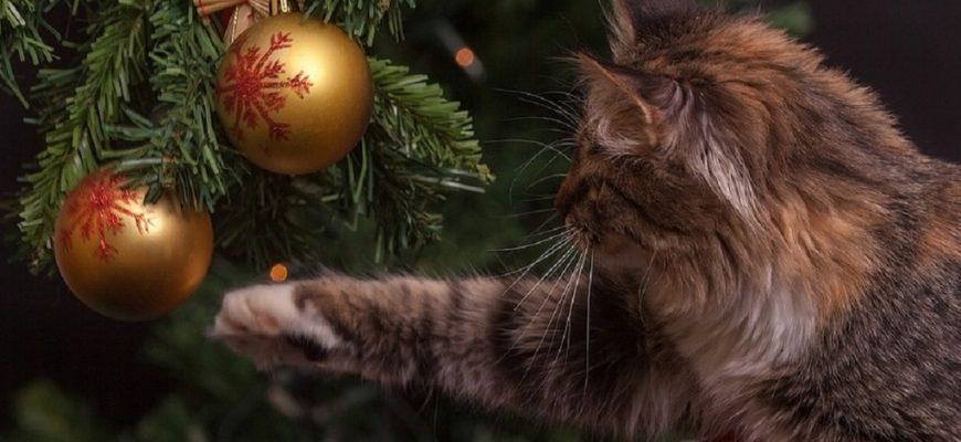 новогодняя ёлка,новогодняя елка и кошка,