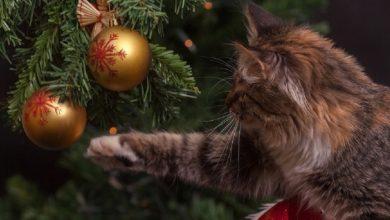 Photo of Когда надо убирать новогоднюю ёлку по народным приметам?