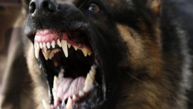 Photo of Собаки насмерть загрызли ребёнка, пока его мать отмечала Новый год