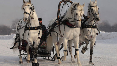 Photo of 9 января — народный праздник Степановы труды 2021. Что нельзя делать в этот день?
