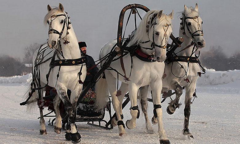 тройка лошадей,сани тройка лошадей,зимняя тройка,тройка лошадей зимой,