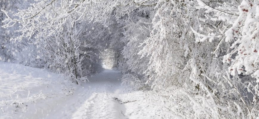 зима деревья снег,