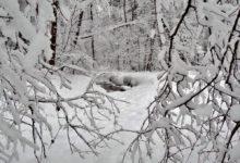 Photo of Что обязательно нужно сделать в Федосеев день 24 января