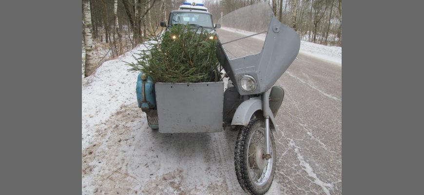 елки в люльке мотоцикла, елки в коляске мотоцикла, Гороховец елки рубка,