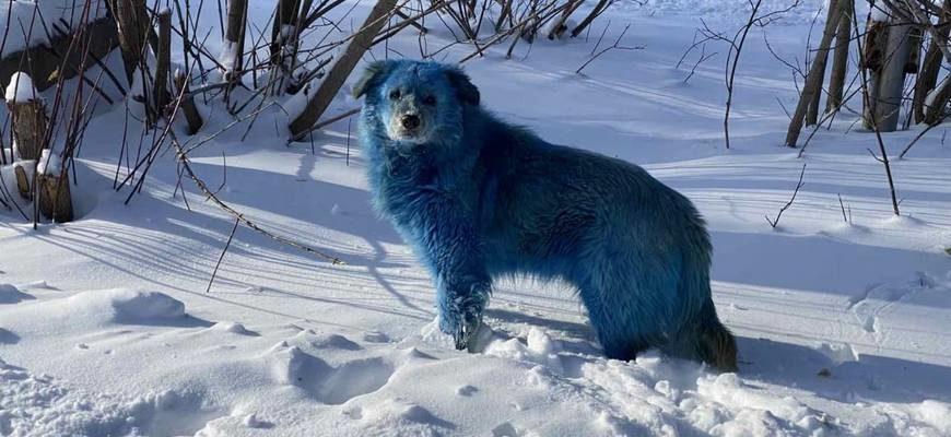 Дзержинск голубые собаки