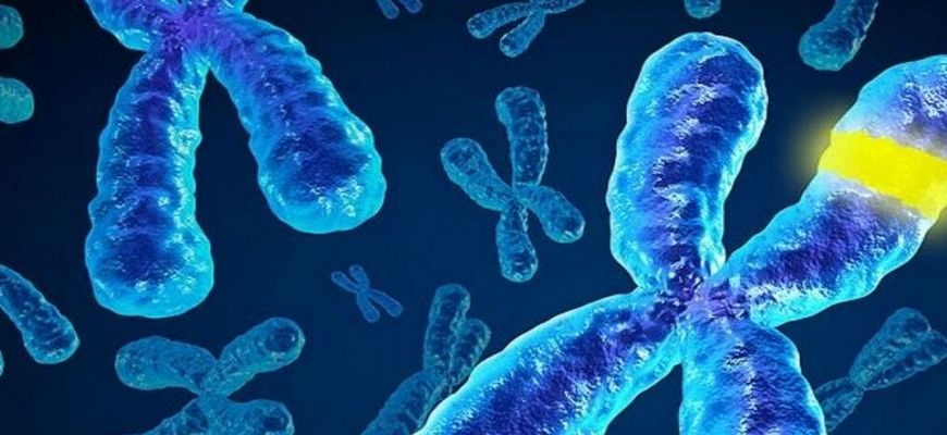 хромосома, хромосомы, мужская хромосома,