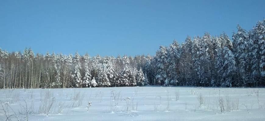 лес зима, Мстера зима, зимний лес,