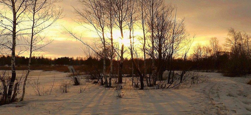 Федот Ветронос, 15 марта, март лес снег, март природа солнце, весна март, весна лес март, солнце март лес,
